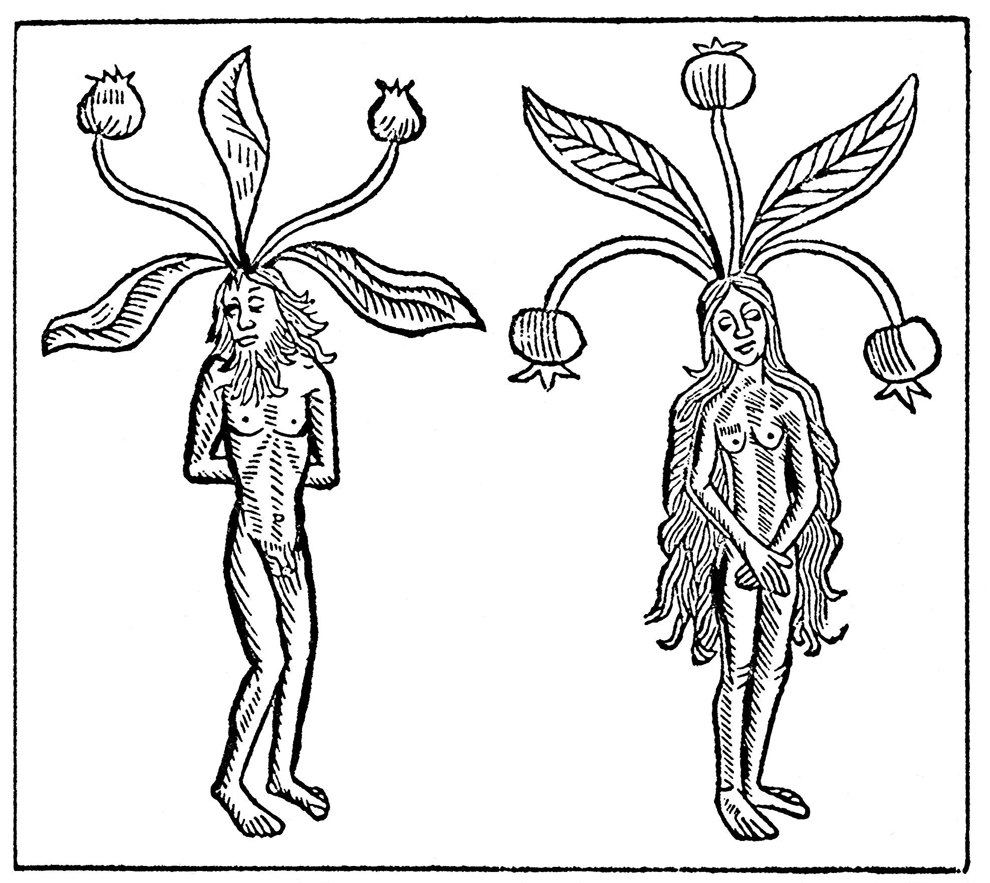 Mandrake man and woman from
